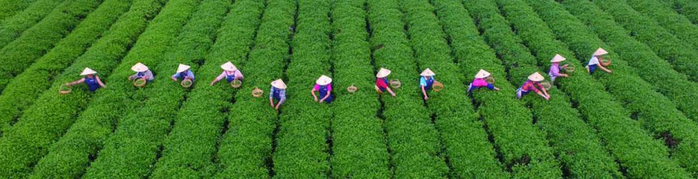 сельское хозяйство в китае и юго-восточной азии